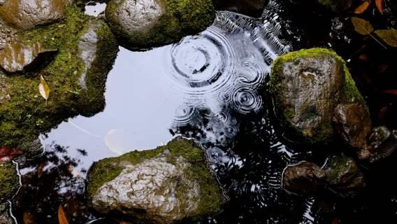 Deszcz dostarczy cennej wody, a niektórym także pieniędzy