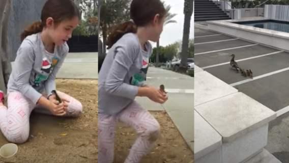 6-latka uratowała kaczuszki, używając swojej zgrabnej rączki. Mała wielka bohaterka