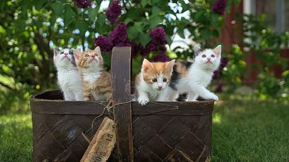 Uwielbiacie filmy z kotkami? A może kręcicie własne? Świetne wieści dla wszystkich miłośników puszystych czworonogów