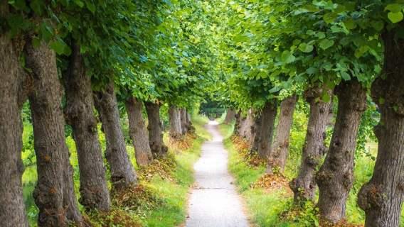 Oszczędności dzięki drzewom są możliwe