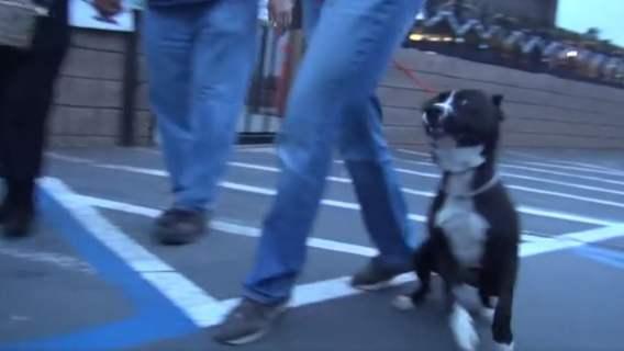 Pies wychodzi ze schroniska. nie potrafi opanować swojej radości