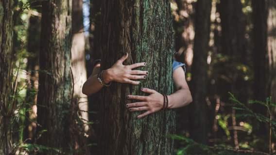 Przytulanie drzewa może pomóc w spędzaniu kwarantanny z większą pogodą ducha