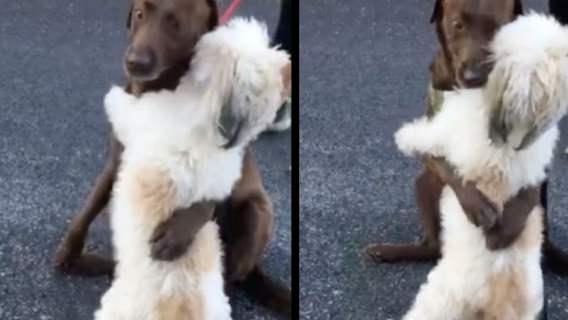 Psy rzuciły się na siebie, nie kryjąc radości