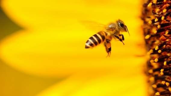 Pszczelarz stworzył muzykę elektroniczną z dźwięków pszczół