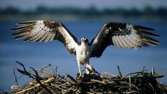 Ptaki pod ochroną ponownie zawitały do Polski