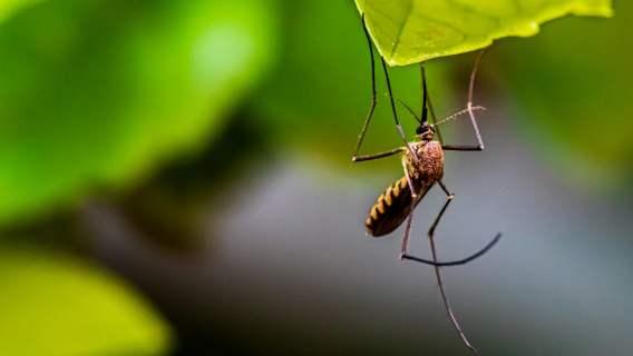 Roślina potrafi skutecznie odstraszyć owady