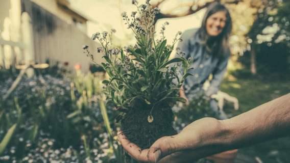 Rośliny mają zmienić miasto w przestrzeń bardziej przyjazną środowisku