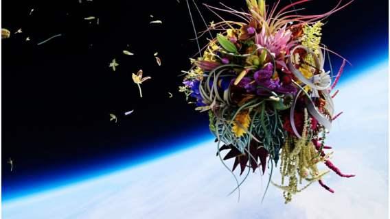 Kwiaty w kosmosie