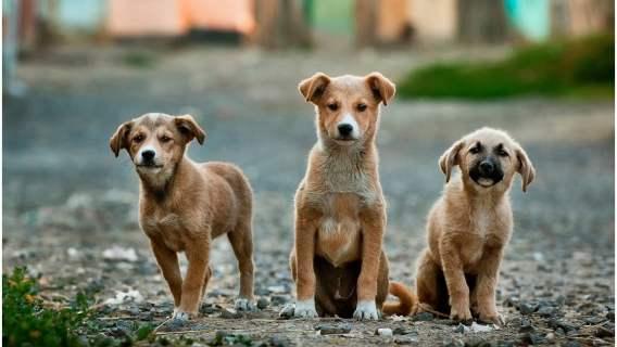 Adopcja zwierzaka jeszcze nigdy nie była tak łatwa