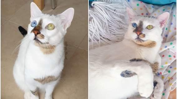Adopcja tego kociaka i jego właścicielki okazała się doskonałą decyzją