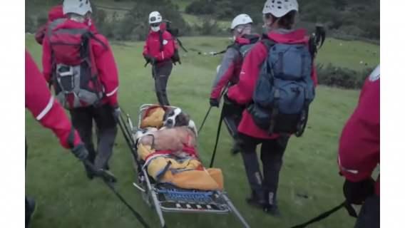 Ekipa ratunkowa pomaga suczce Daisy.