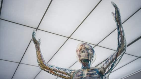 Niezwykły skan ludzkiego ciała