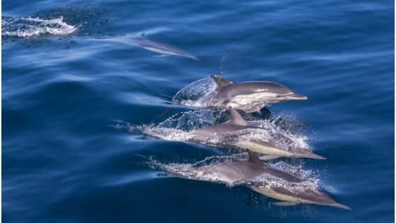 Delfiny potrafią być doskonałymi opiekunami dla swojego potomstwa