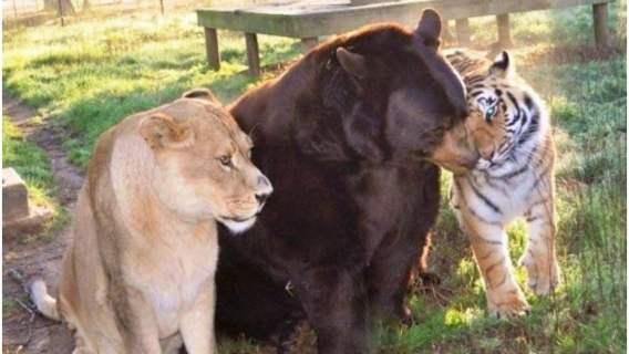 Dzikie zwierzęta zostały prawdziwymi przyjaciółmi