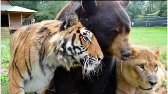 Dzikie zwierzęta stworzyły trójkę prawdziwych przyjaciół