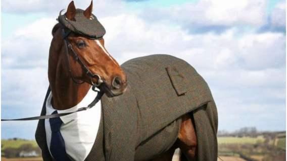 Koń ubrany w garnitur