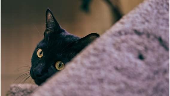 Kot pomógł schwytać sprawcę przestępstwa