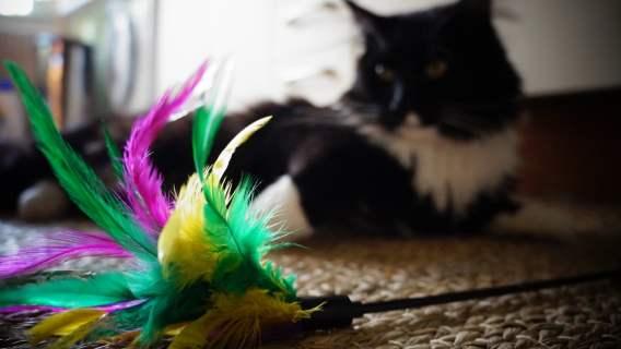 Kot z czterema uszkami jest zupełnie wyjątkowy