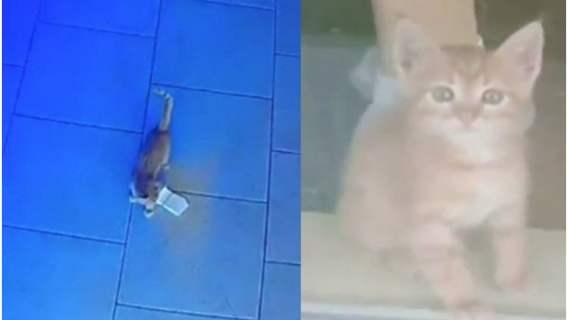 Kot próbował wynieść pieniądze z baru.