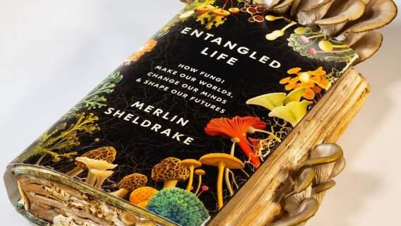 Książka, a na niej wyhodowane grzyby