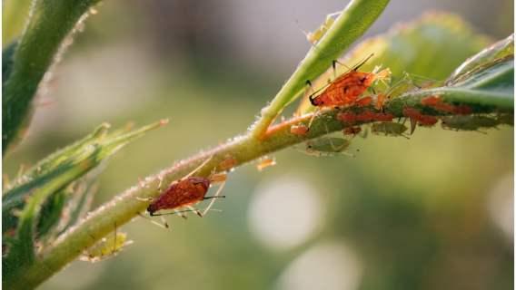 Najlepsze sposoby na mszyce i mrówki w ogrodzie