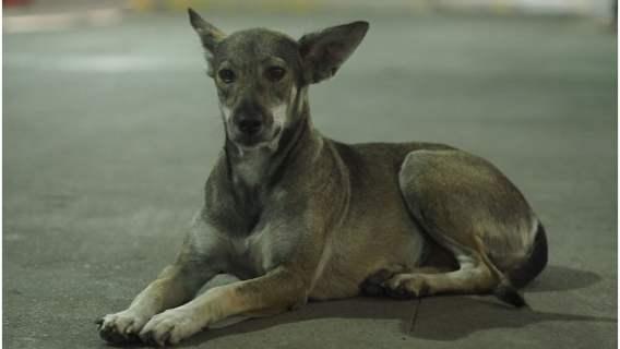Pies znalazł bezpieczne miejsce dzięki ochroniarzowi
