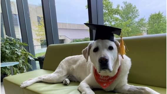 Pies z doktoratem. Otrzymał tytuł za zasługi i osiągnięcia w pracy z ludźmi