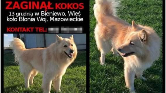 Pies odnaleziony w schronisku