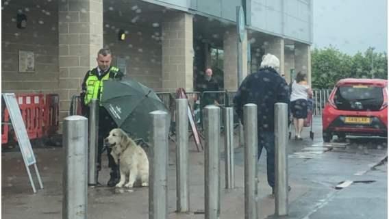 Ochroniarz osłania psa przed deszczem