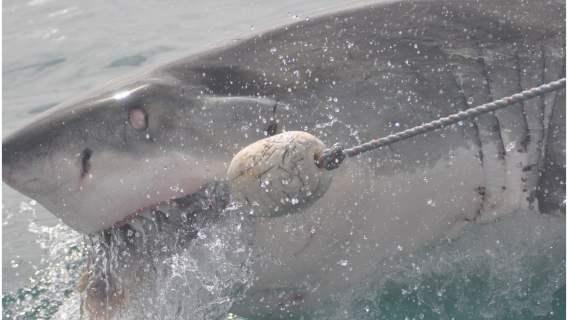 Rekin zaatakował chłopca.