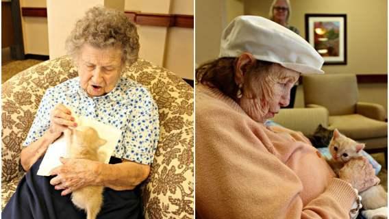 Pacjenci domu starców z kociętam - Arizona