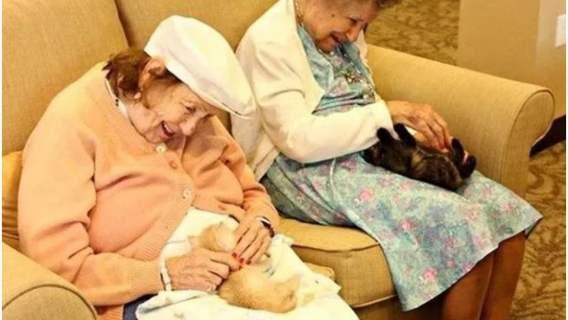 Emeryci z kociakami