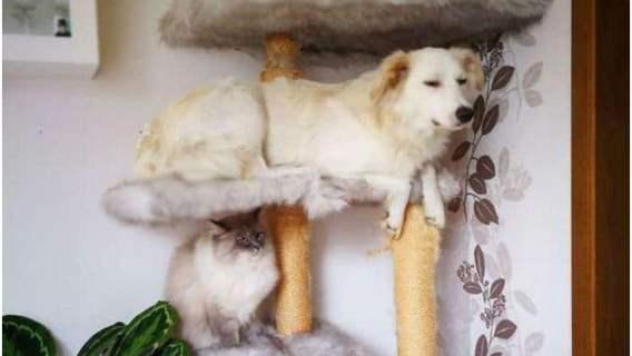 Psy, które myślą, że są kotami. Przezabawne zdjęcia