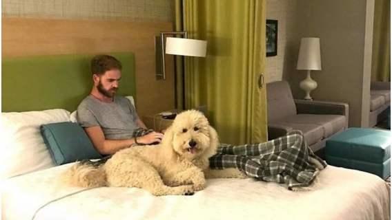 Psy ze schroniska towarzyszą hotelowym gościom.