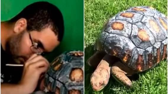 Żółw otrzymał skorupę wydrukowaną na drukarce 3D.