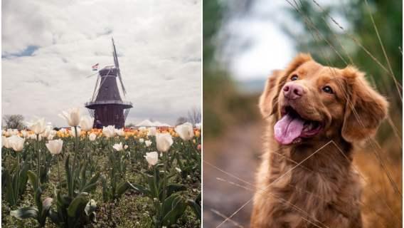 Bezdomne psy przestały być problemem Holandii