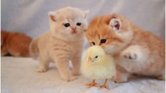 Małe kotki zaprzyjaźniły się z pisklęciem