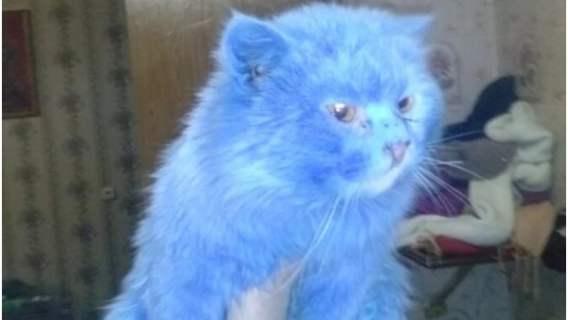 Kot, który wygląda jak postać z filmu Avatar