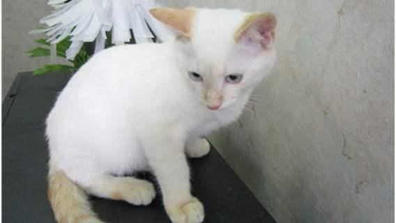 Kotek po uratowaniu przez Anthonego