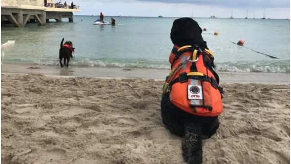 Odważny pies Otto uratował chłopca