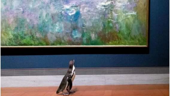 Pingwiny zwiedzają muzeum