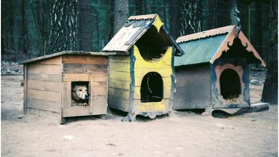 Zmiany dotyczące bezdomnych psów i kotów