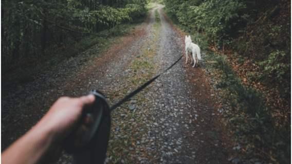 Nowe zasady dotyczące wyprowadzania psów