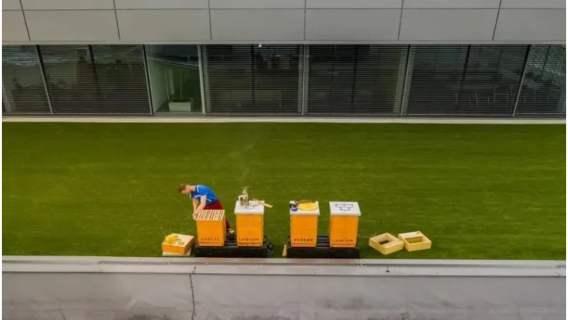 Pszczoły na dachu ekskluzywnego salonu samochodowego
