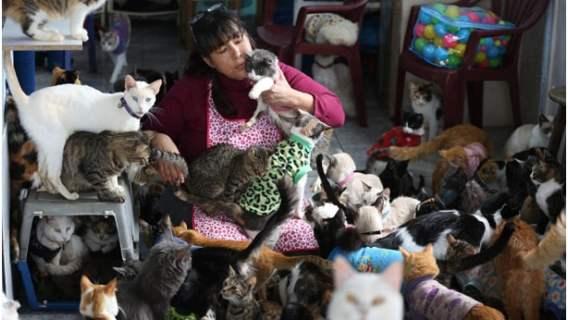 Pielęgniarka z Peru opiekuje się chorymi kotami
