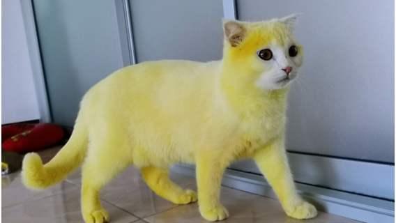Była w rozsypce i bała się o swojego kota. Uratowała mu życie w niezwykły sposób, przez który stał się żółty jak kurczak