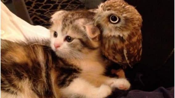 Kot i sowa sa najlepszymi przyjaciółmi