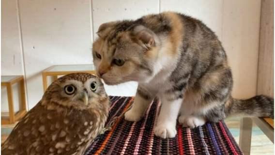 Kot i sowa najlepszymi przyjaciółmi