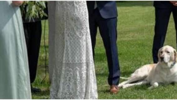 Brali ślub w plenerze. Nagle pies nie wytrzymał napięcia. Zapamiętają to do końca życia
