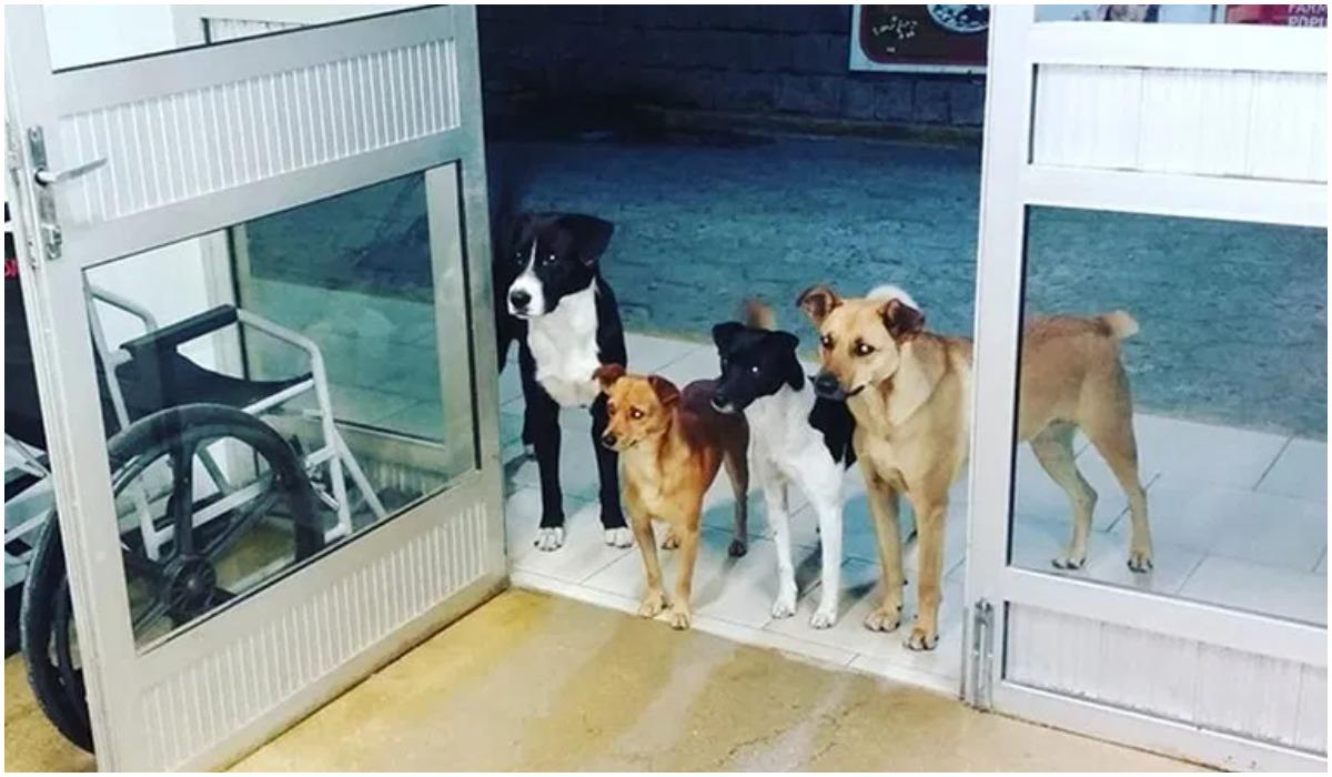 Bezdomny z psami w szpitalu